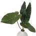 Leaves In White Pot