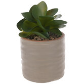 Succulent In Wavy Taupe Pot