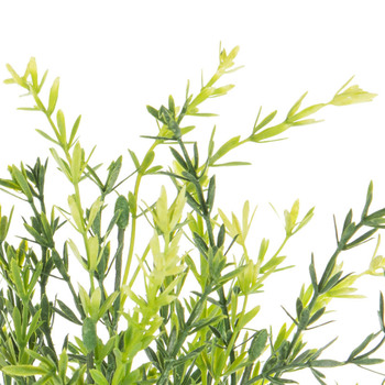 Asparagus Bush