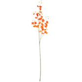 Mini Phalaenopsis Orchid Spray