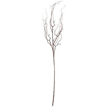 Brown Twig Stem
