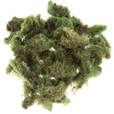Soft Reindeer Moss