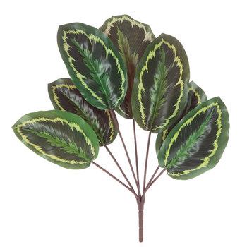 Maranta Leaf Spray