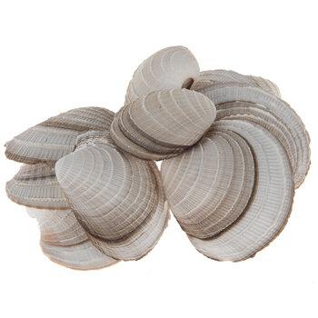 Cheena Clam Shells