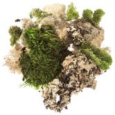 Assorted Moss