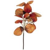 Orange Eucalyptus Leaf Pick