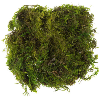 Preserved Forest Moss