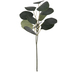 Eucalyptus Leaf Pick