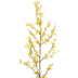 Yellow Forsythia Branch