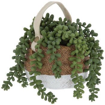 Donkey Tail Plant In Woven Pot
