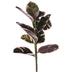 Rubber Leaf Stem