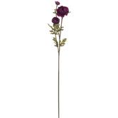 Plum Ranunculus Stem
