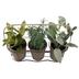 Potted Herbs In Metal Basket