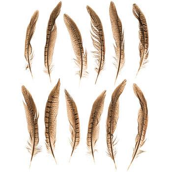 """Natural Pheasant Tail Feathers - 4"""" - 10"""""""
