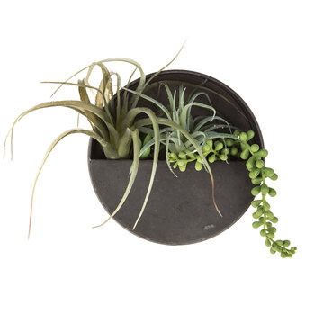Round Air Plant Metal Wall Decor