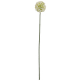 White Allium Stem
