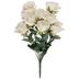 Ivory Rose Bush
