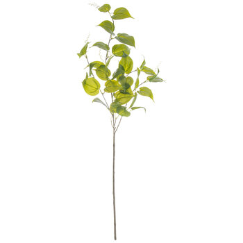 Evergreen Spray