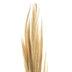 Bleached Broom Grass