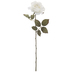 White Rose Stem