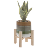 Succulent In Pot With Plant Stand