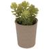 Green Succulent In Pot