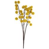 Yellow Pom Pom Bush