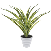 Green Spider Plant In Pot