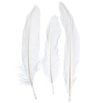 White Turkey Feathers