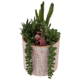 Succulents In Terra Cotta Pot