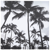 White & Black Palm Trees Canvas Wall Decor
