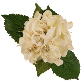 Vanilla Hydrangea Stem