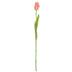 Pink Garden Tulip Stem