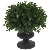 Green Eucalyptus Topiary In Urn