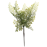 Maidenhair Fern Branch