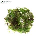 Green Deco Moss