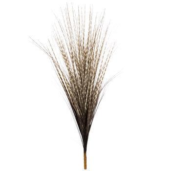 Zebra Grass Bush