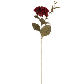 Deep Red Hydrangea Stem