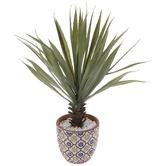 Yucca In Floral Terra Cotta Pot