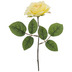 Light Yellow Rose Pick