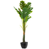 Split Leaf Philodendron Potted Plant