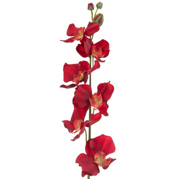 Phalaenopsis Orchid Stem