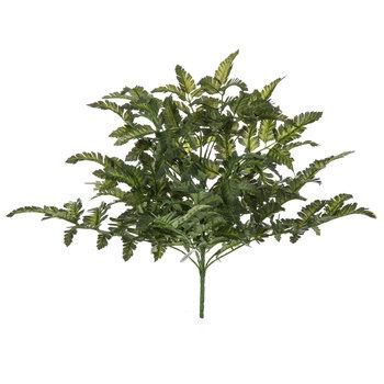 Pictum Fern Bush