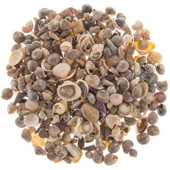 World Mix Shells