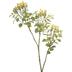 Yellow Pieris Buds & Lemon Leaf Spray