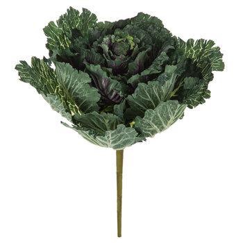 Green & Purple Cabbage Bush