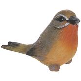 Gray & Orange Bird Looking Right