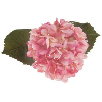 Pink Hydrangea Stem