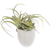 Succulent & Air Plant In White Pot Wall Decor
