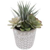Distressed Honeycomb Pot With Succulents